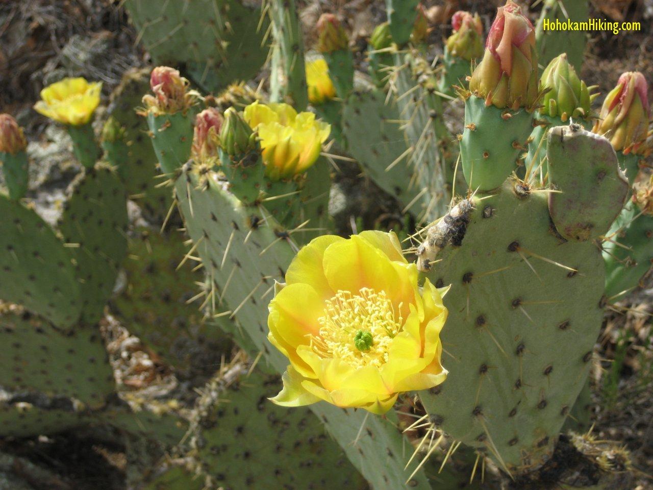 Elevate Hiking Edible Cacti Part 2